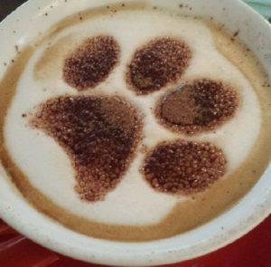 pfotenkaffee