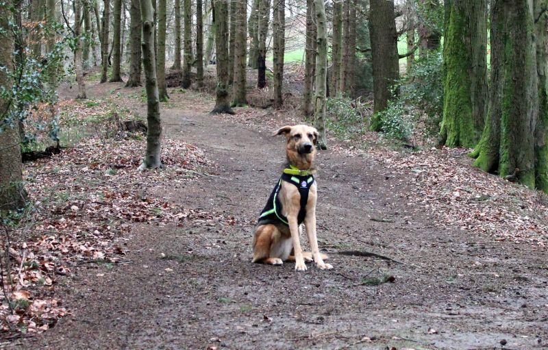 Hund sitzend im Wald