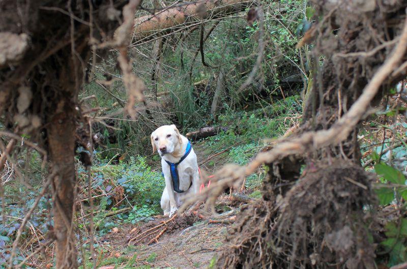 Hund zwischen Bäumen