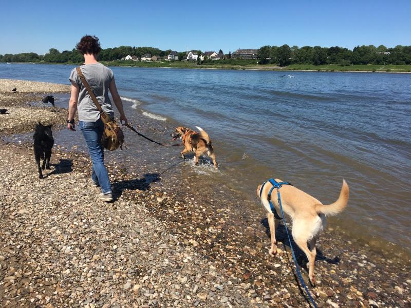 Hundespaziergang am Rhein