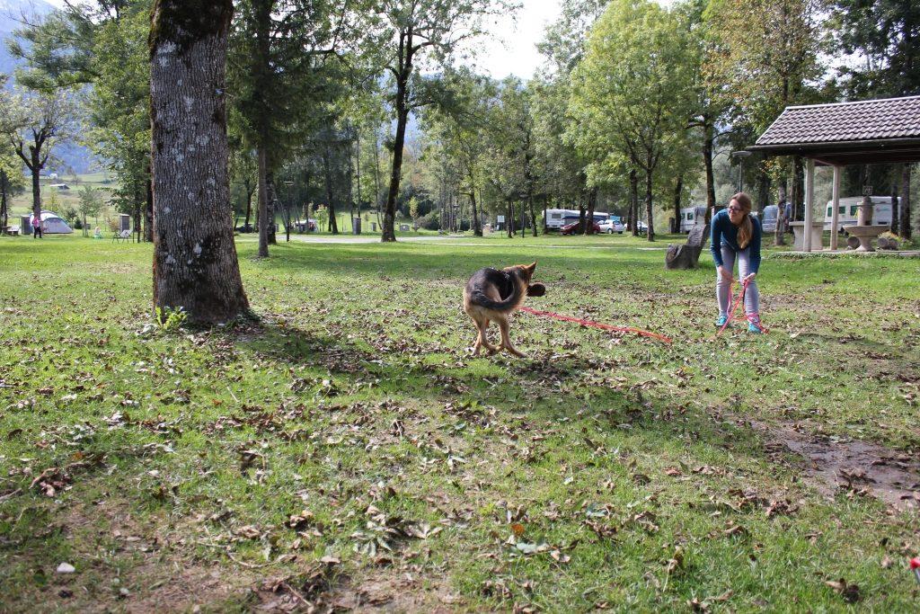 Hund spielt mit Futterdummy