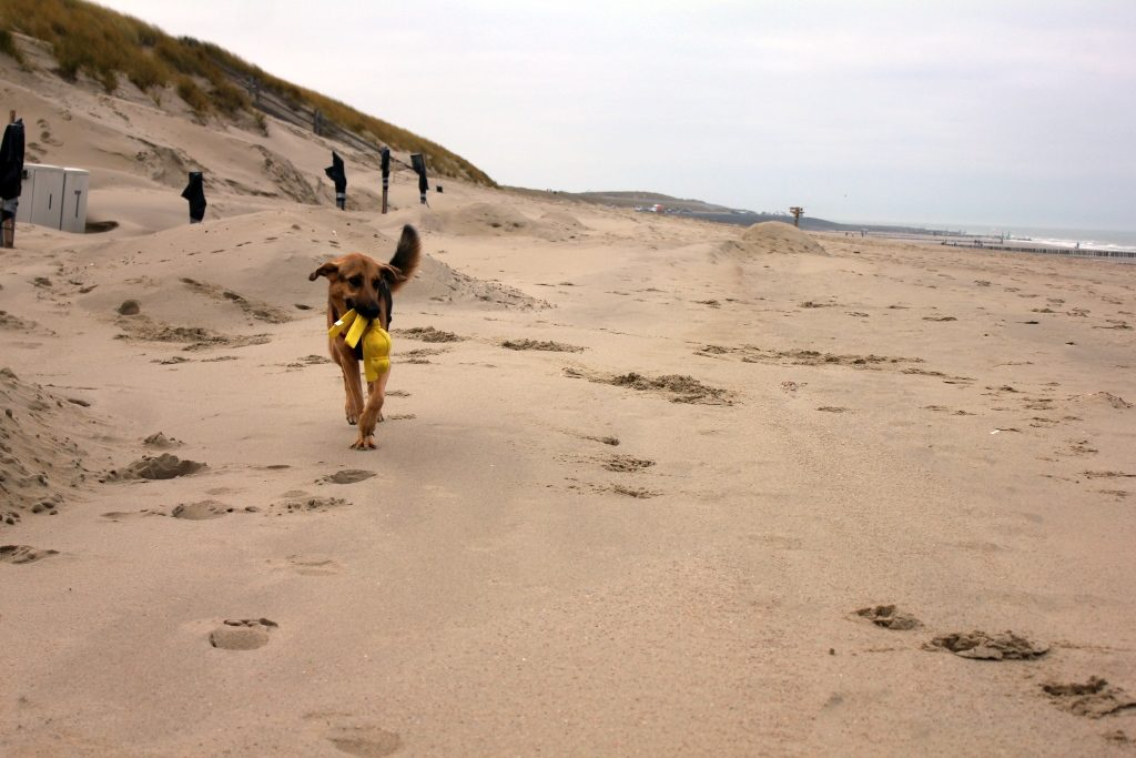 Amber mit Dummy am Strand