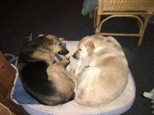 Zwei Hunde kuscheln auf einem Hundebett